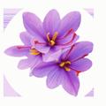 saffron-icon3